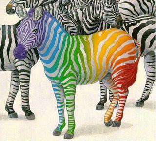 Zebra_001