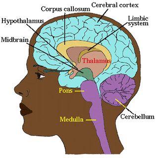 Neuro-3